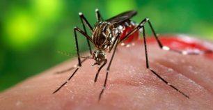 menghilangkan bekas gigitan nyamuk pada bayi