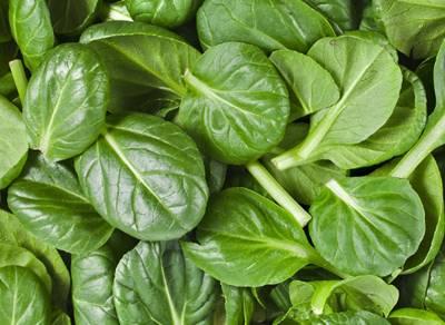 sayuran hijau penambah darah