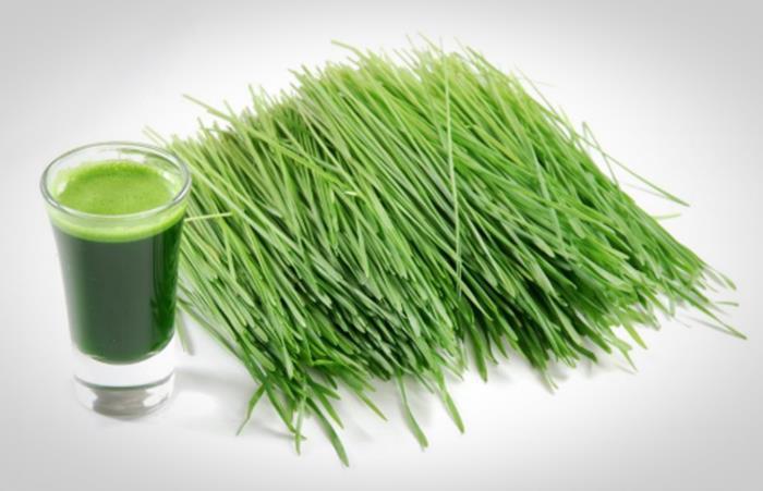 wheatgrass untuk menaikan trombosit
