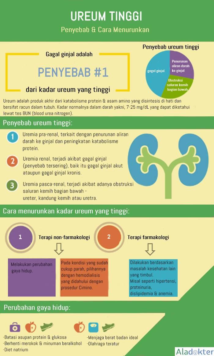 Penyebab ureum tinggi